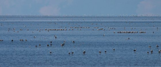 Lake Torrens